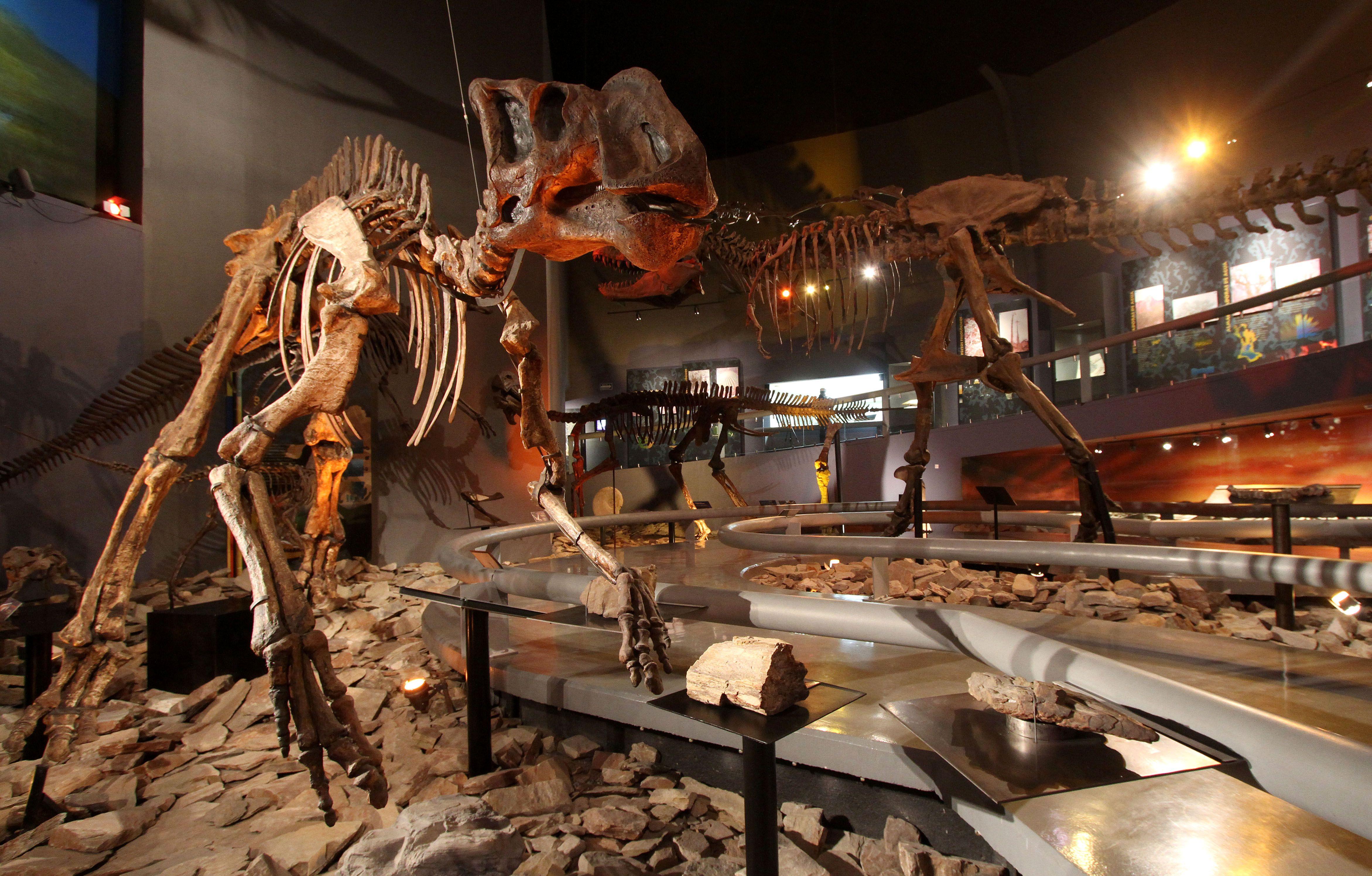 Fósiles de dinosaurios en Coahuila