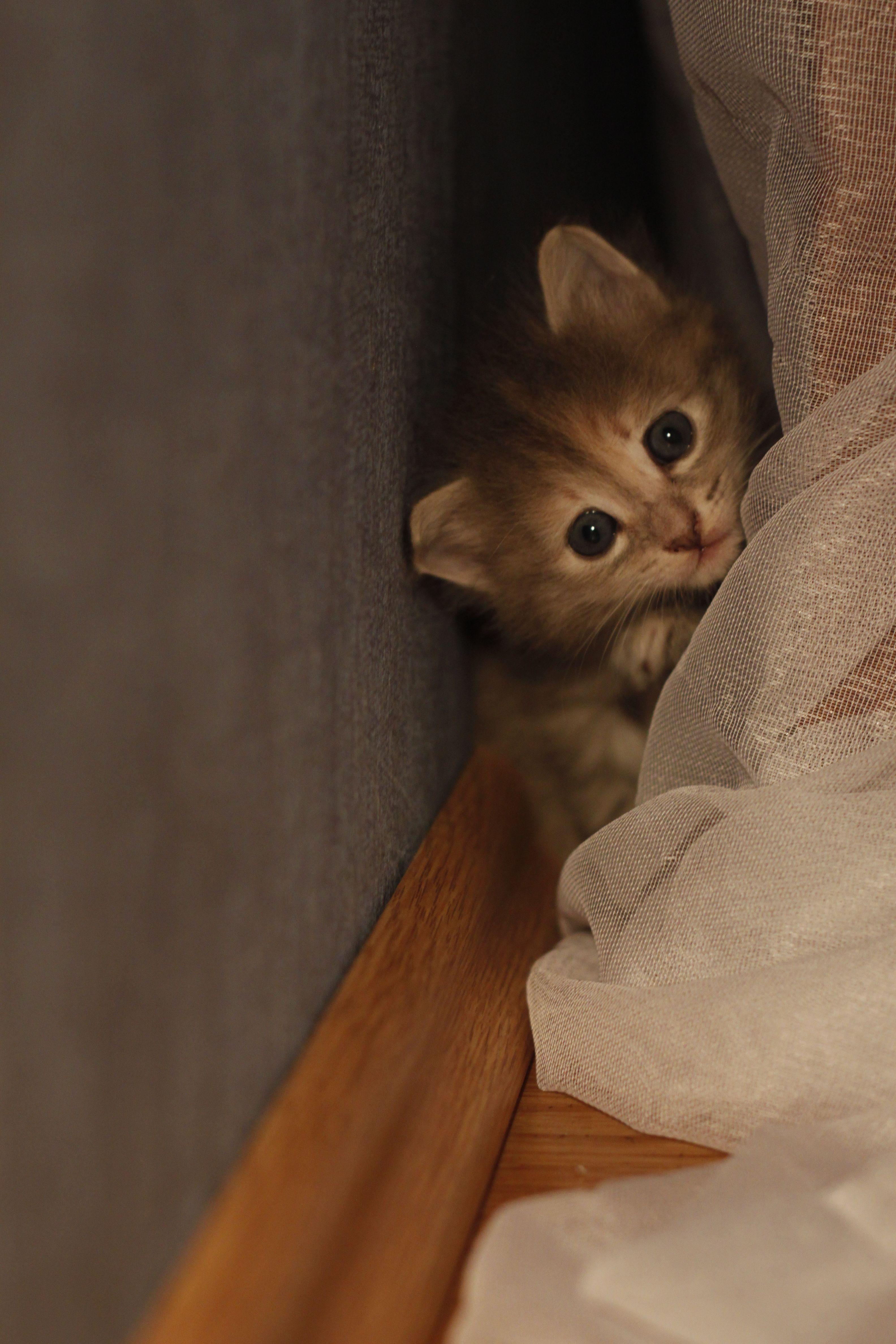 Hiding Kitten Cute Little Animals Kittens Cutest Baby Animals