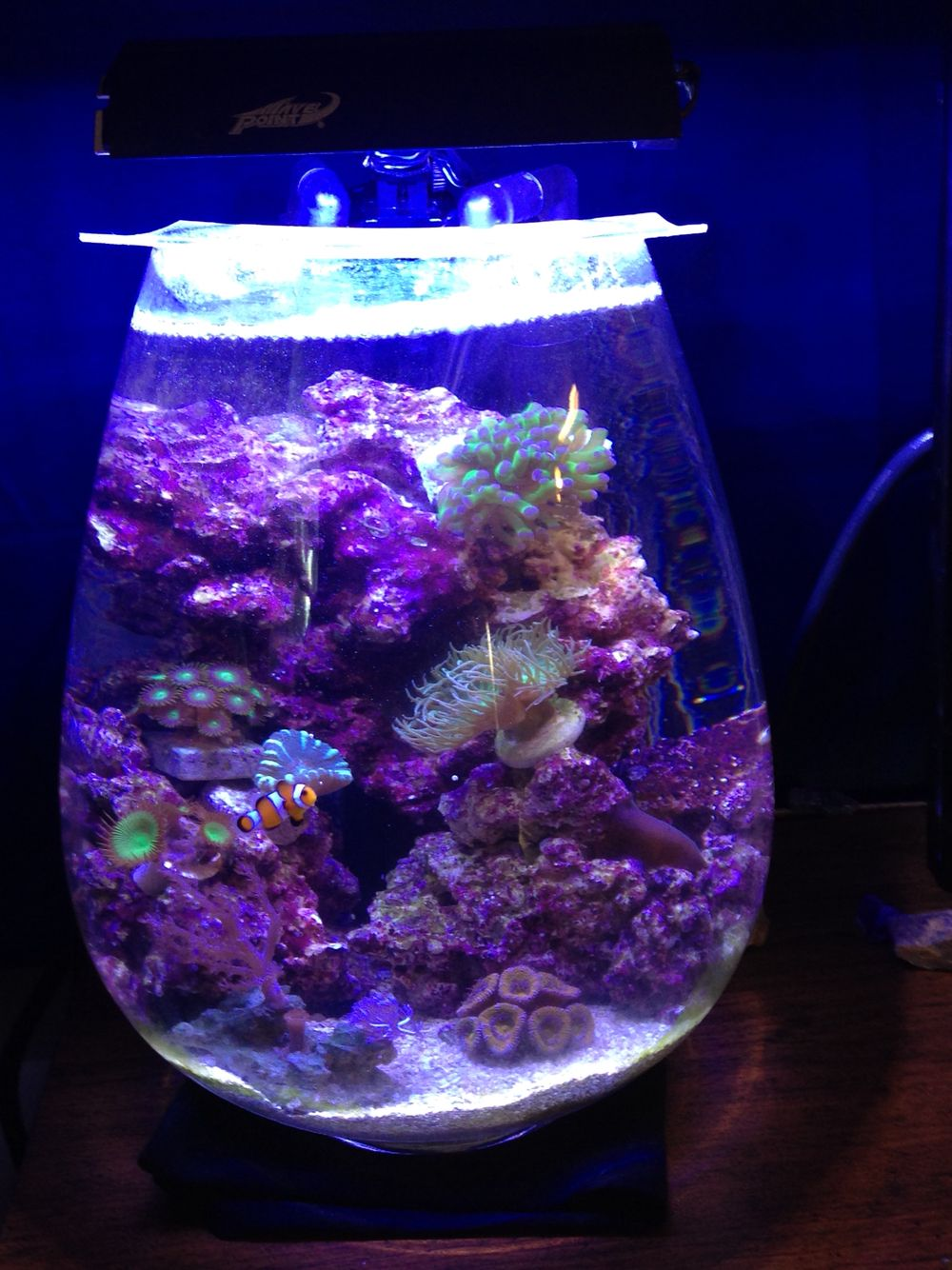 pico vase project reef pinterest aquariums reef tanks and saltwater aquarium. Black Bedroom Furniture Sets. Home Design Ideas