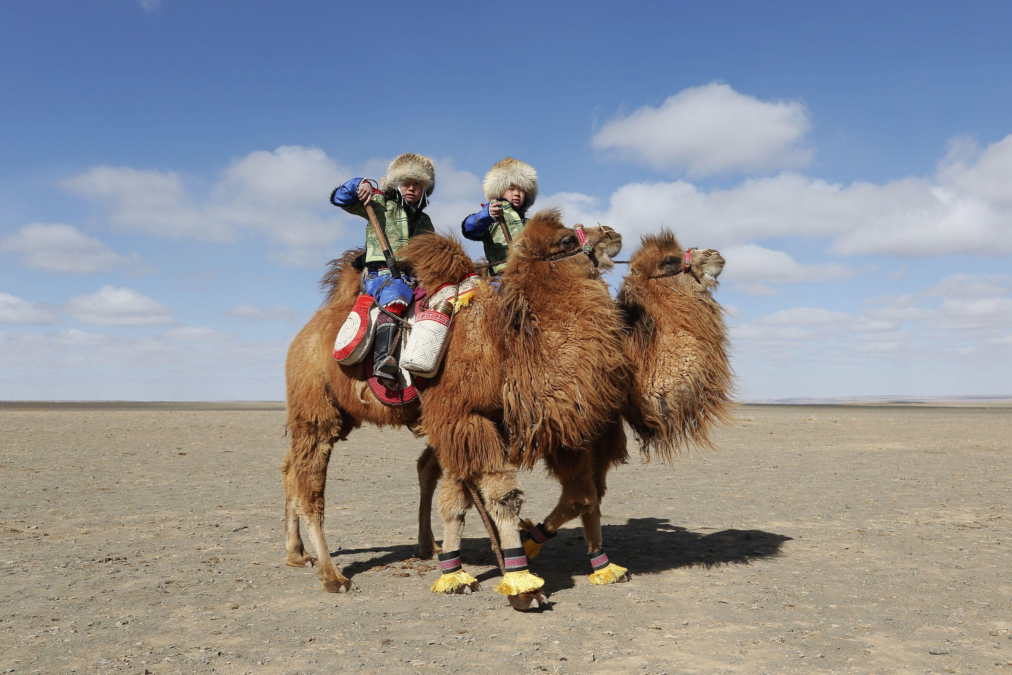 нею картинка верблюда и человека фатина это эффектное