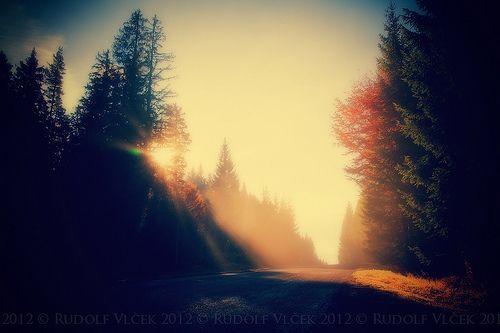 Road / Rays
