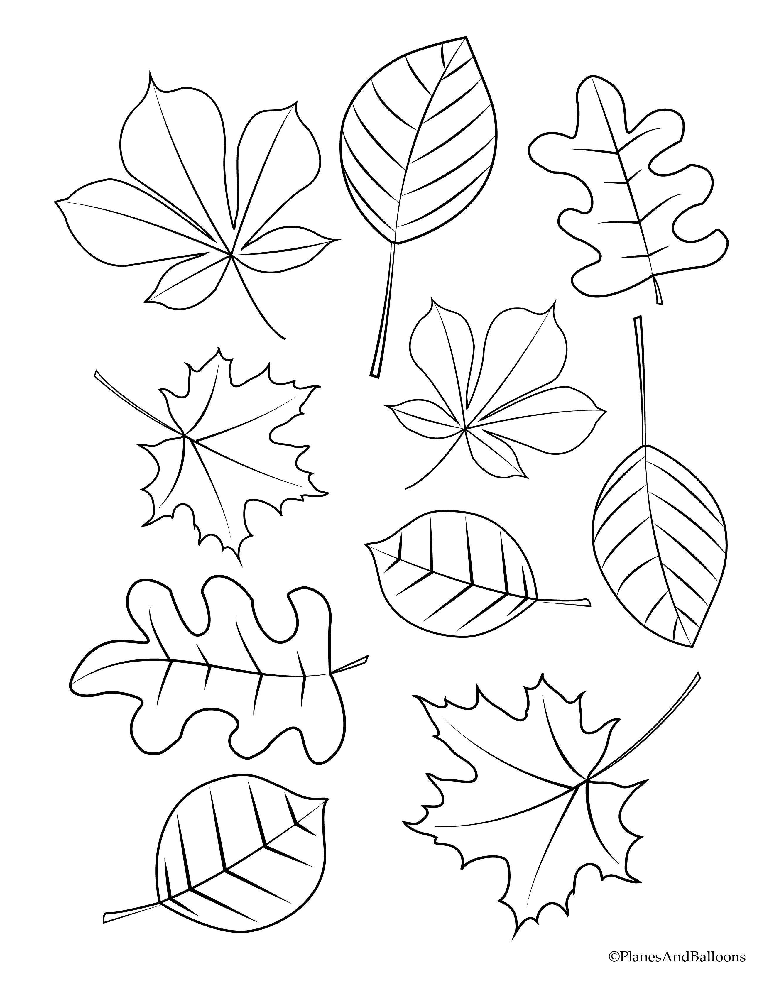 Fall Leaves Preschool Coloring Pages Different Designs