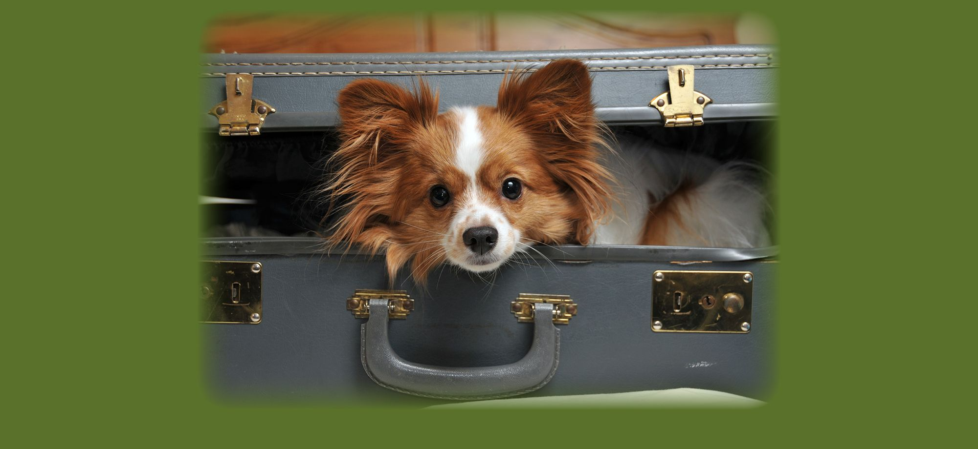 Pet Friendly Hotels In Virginia Lansdowne Resort Dog