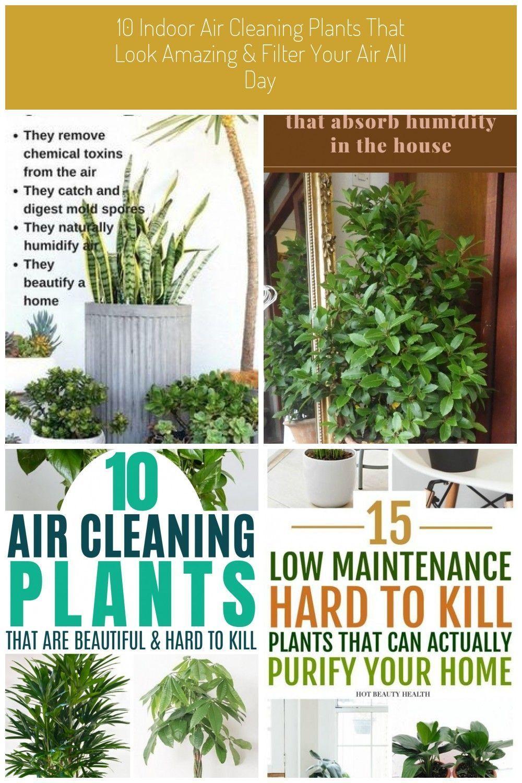 beste Zimmerpflanzen für Asthmaallergien und