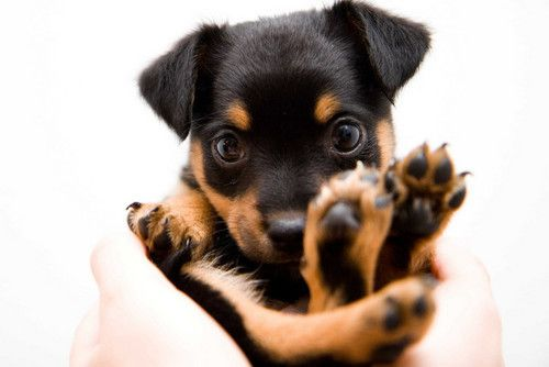Hello Animals Cute Little Animals Puppies