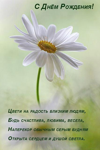 приводится поздравление с днем рождения умными стихами изгороди
