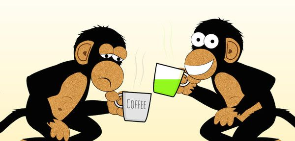 How Much Matcha Green Tea Should I Drink? – PureChimp