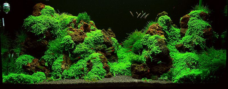 Mountain Aquascape Aquascape Fish Tank Plants Tropical Fish Tanks