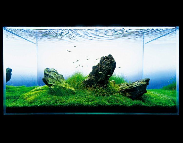 Ada nature aquarium aquascape the green machine for Ada fish tank