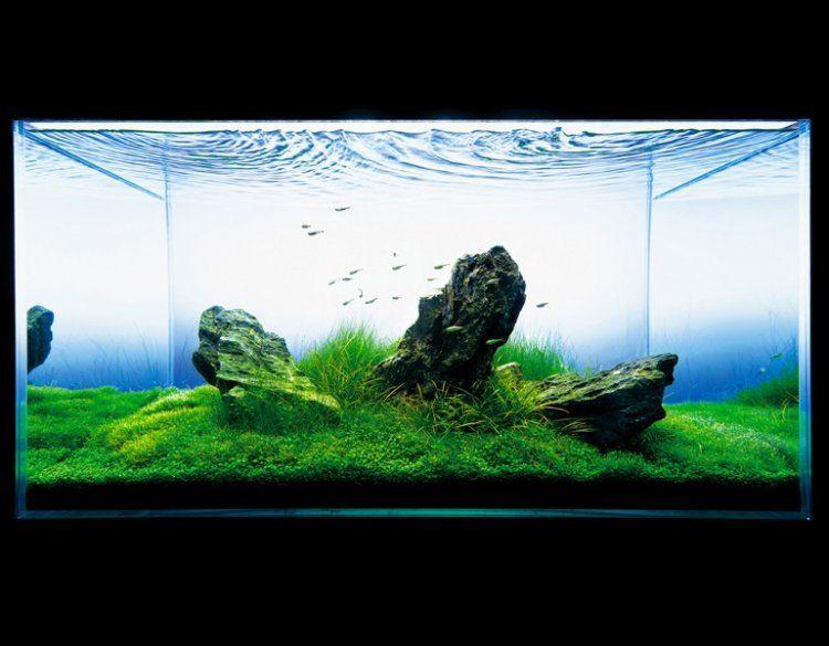Ada Nature Aquarium Aquascape Nature Aquarium Aquascape Aquarium Aquascape