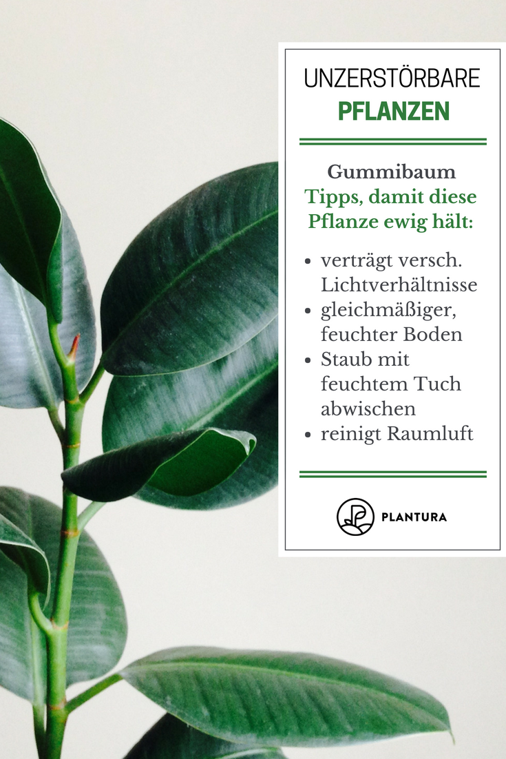 Die 10 kaum zu tötenden Pflanzen - Plantura