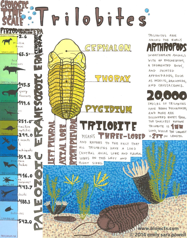 Mini Poster 5 Facts About Trilobites