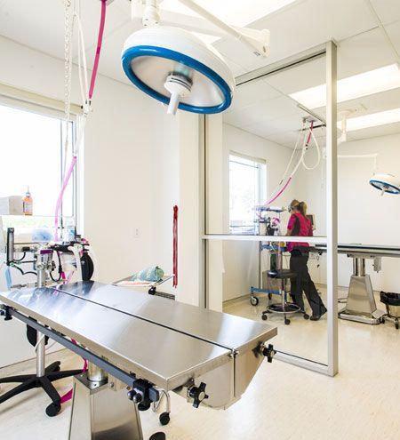 2013 Veterinary Hospital Of The Year Lap Of Luxury Veterinary