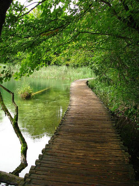 "Check out  ""The wooden path in Plitvice Lakes National Park, Croatia"" Decalz @Lockerz"