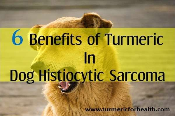 6 Benefits Of Turmeric In Dog Histiocytic Sarcoma   Ty my