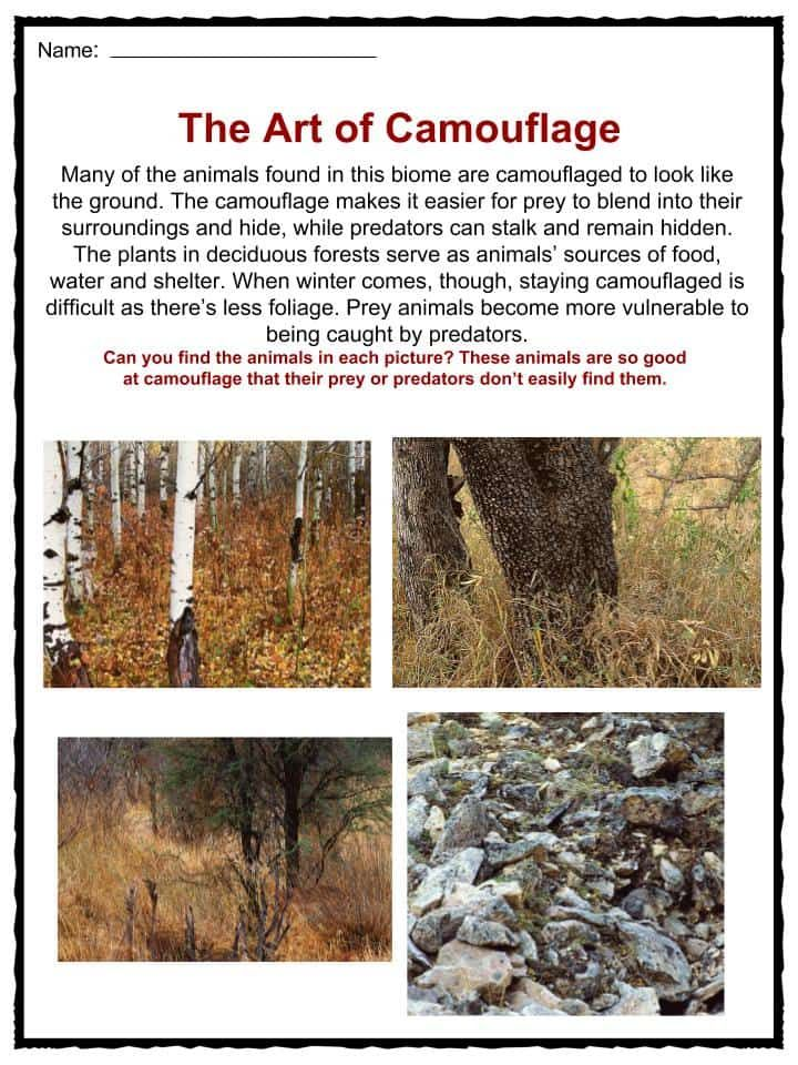 Deciduous Forest Biome Facts, Worksheets & Information For Kids ...