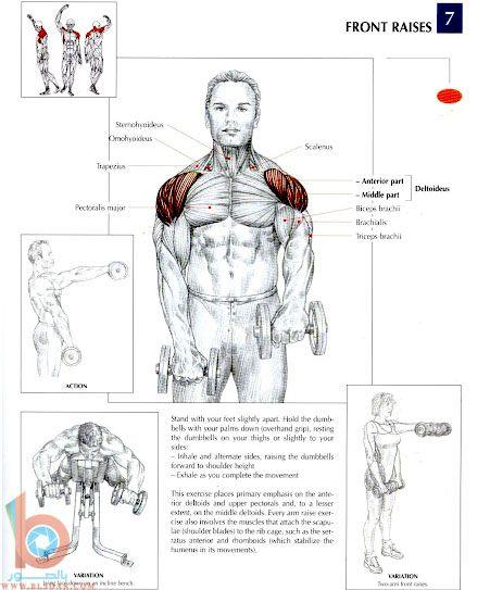 تمارين بالصور لعضلات الظهر والكتفين