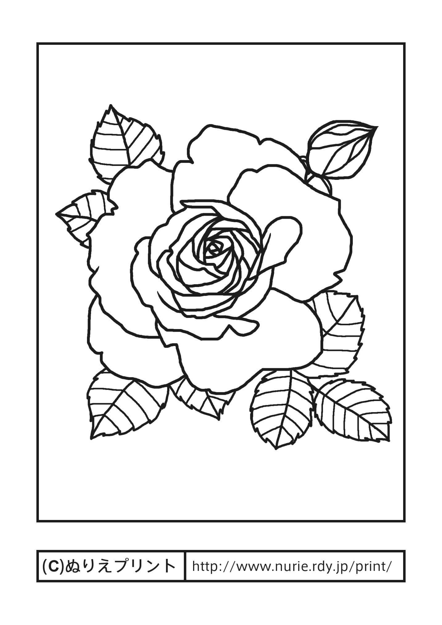バラ5主線黒花の塗り絵無料イラストぬりえプリント 造花