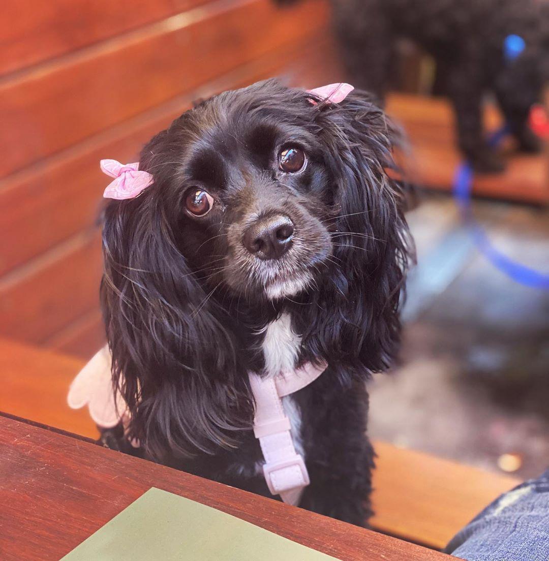 Waiting for my puppy Parma and dog beer at Puppa-Palooza at @newmarketstkilda ... #dog #dogsofinstagram #dogs #puppy #dogstagram #instadog #pet #doglover #love #dogoftheday #cute #doglovers #instagram #pets #of #puppylove #doggo #puppies #cat #doglife #puppiesofinstagram #ilovemydog #dogsofinsta #animals #hund #doggy #petstagram #k #animal