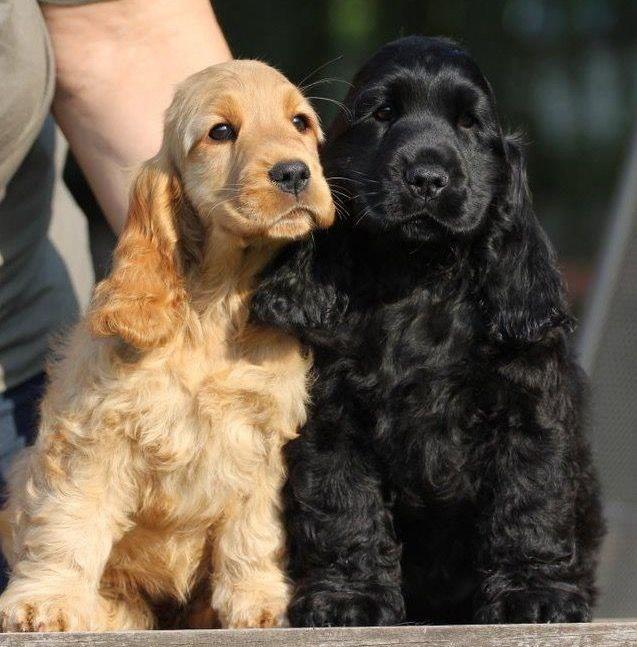 Pin On Doggies Pets