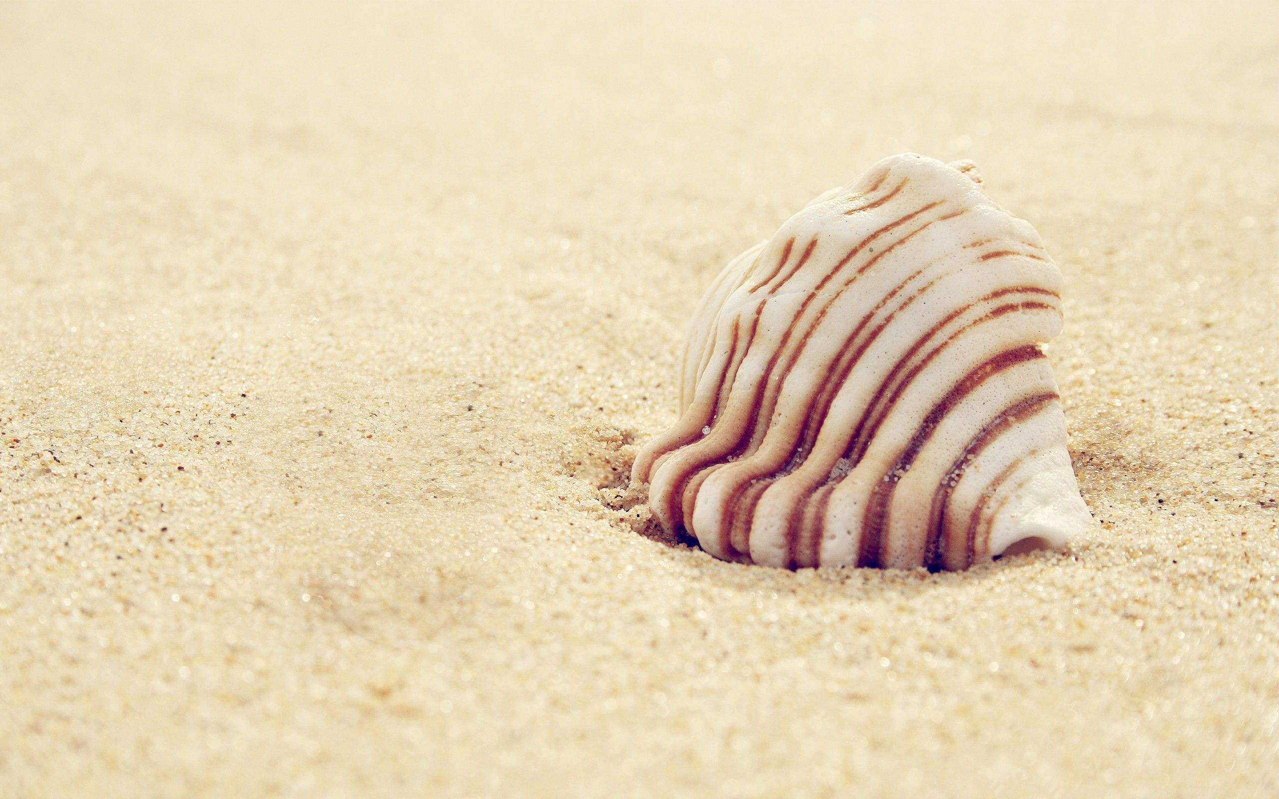 Beach Sand Shell Close Up Wallpaper