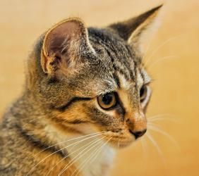 I'm a very sweet kitty searching for my forever home. I'm
