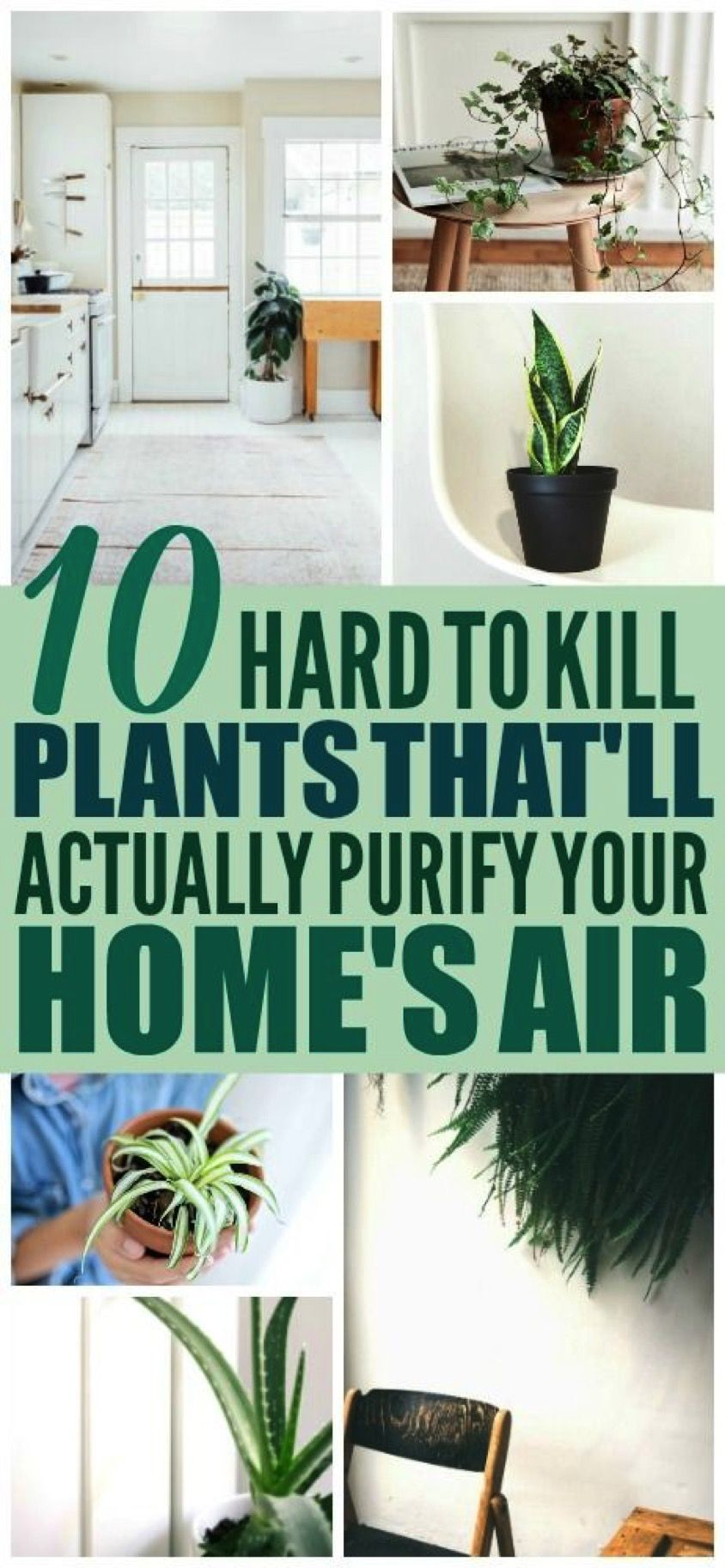 10 Hard To Kill Air Purifying Plants In 2020 Air Purifying Plants Plants Air Purifier