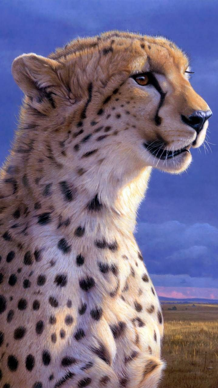 Cheetah drawing | Harvey\'s Bedroom | Animals, Cheetah ...