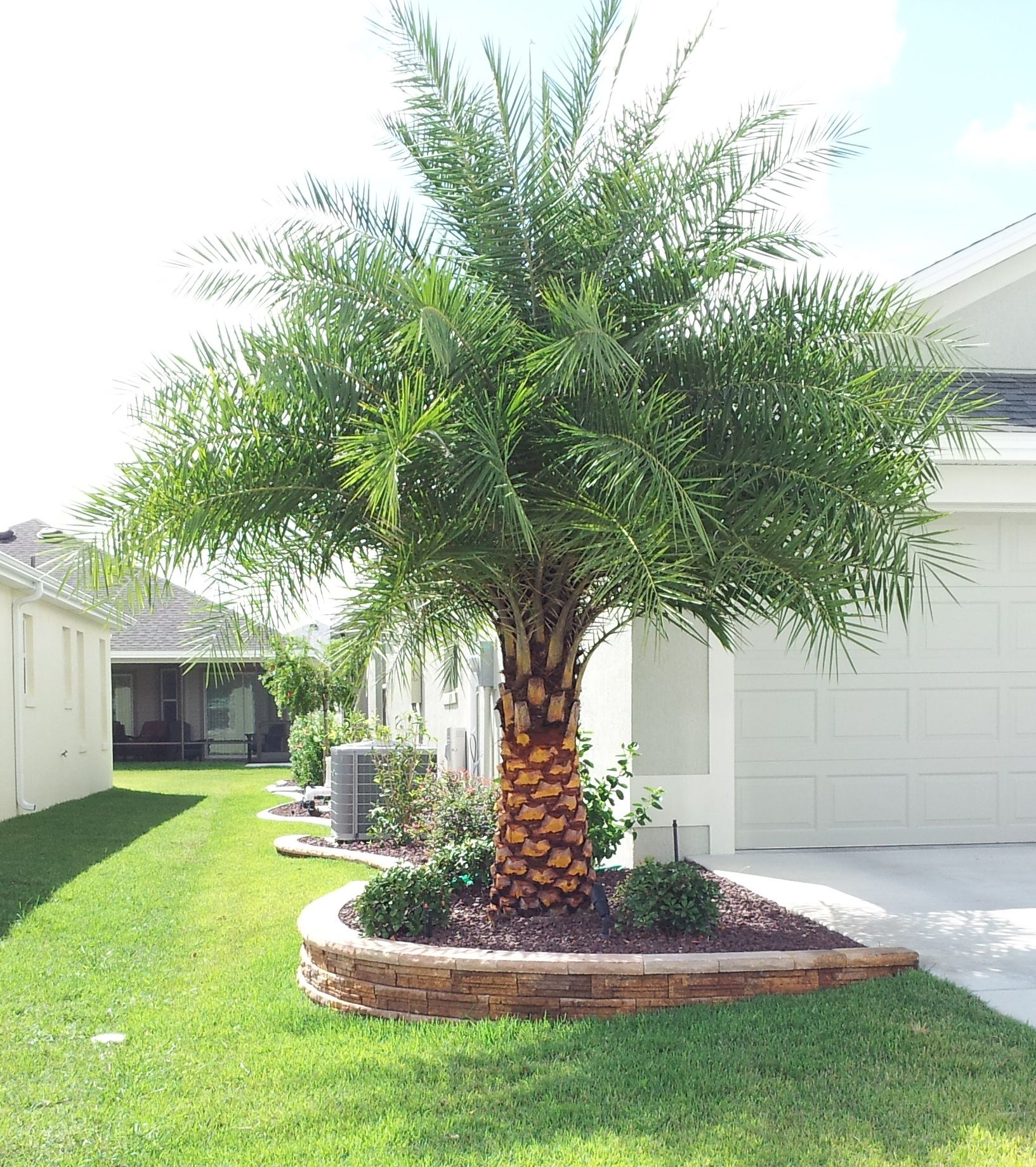 Palm Tree Landscaping Ideas Palm Trees Landscaping Backyard