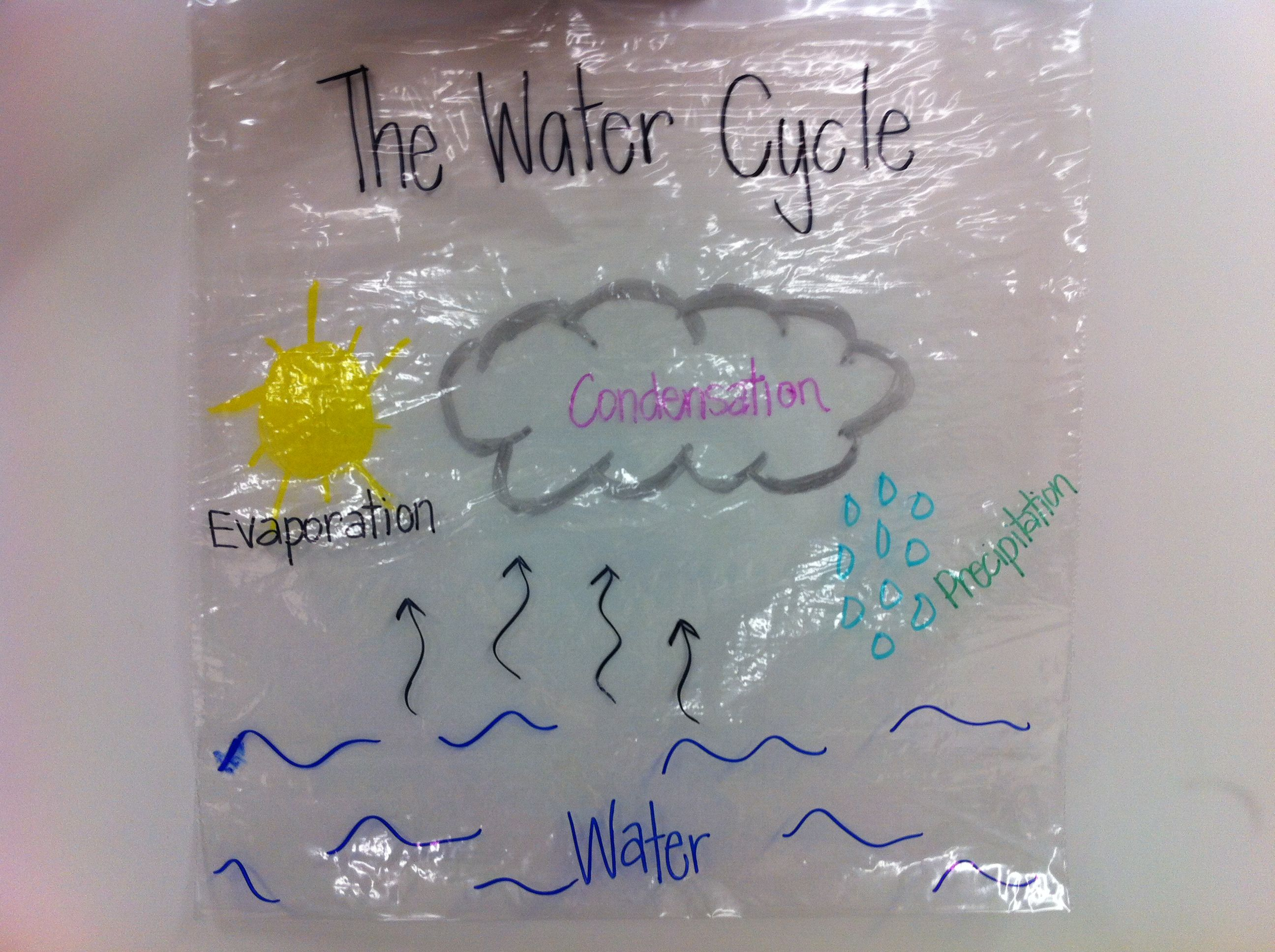 Water Cycle- Label and Tape to window- watch it all happen!