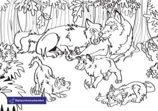 kleurplaten kleurplaten wolven dieren