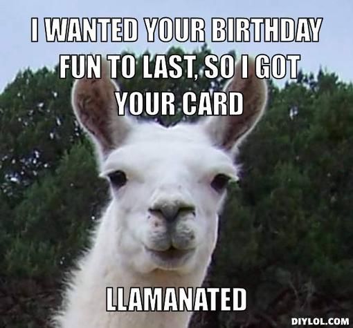 Llama Birthday Happy Meme Its Your Facebook