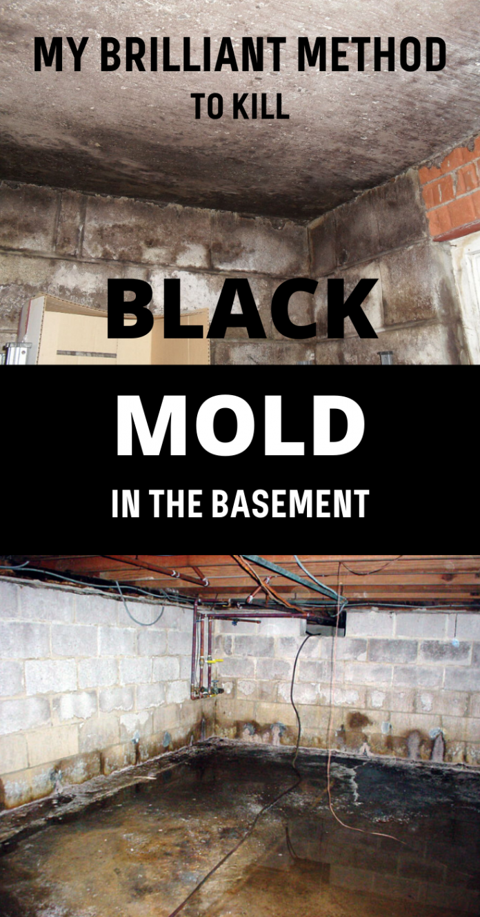 My Brilliant Method To Kill Black Mold In The Basement Xcleaning Net Your Cleaning Tips Kill Black Mold Mold In Basement Cleaning Mold
