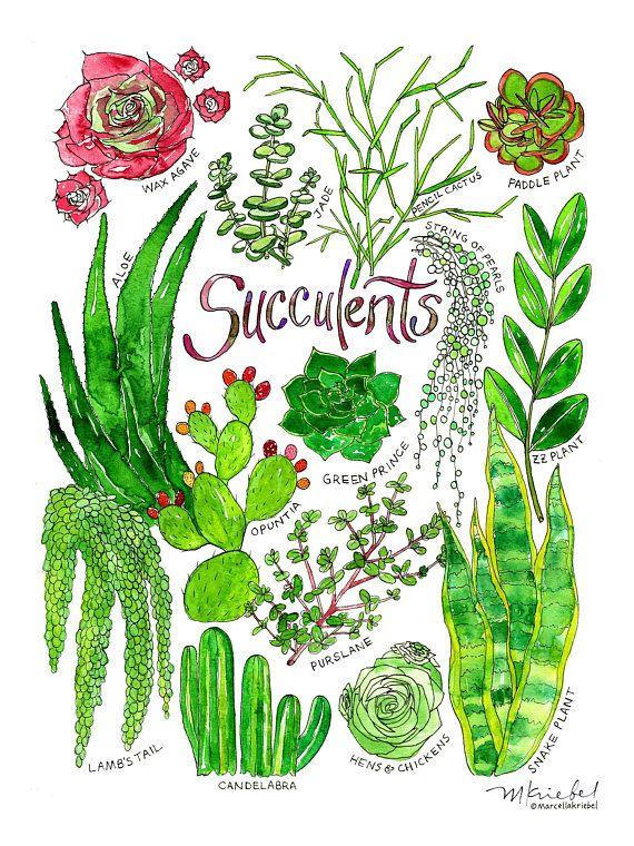 Zz Plant Watercolor
