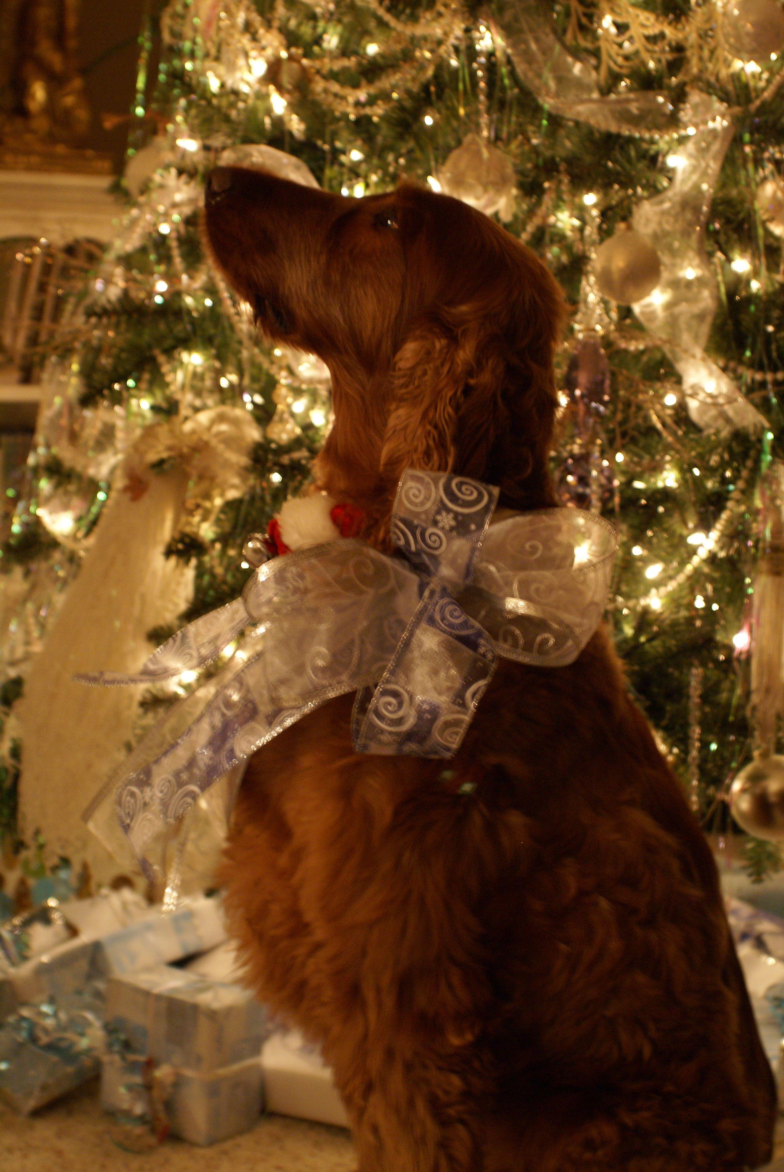 Merry Christmas Baby Irish Setter Puppy Holiday Dogs Santa Claus Dog ...