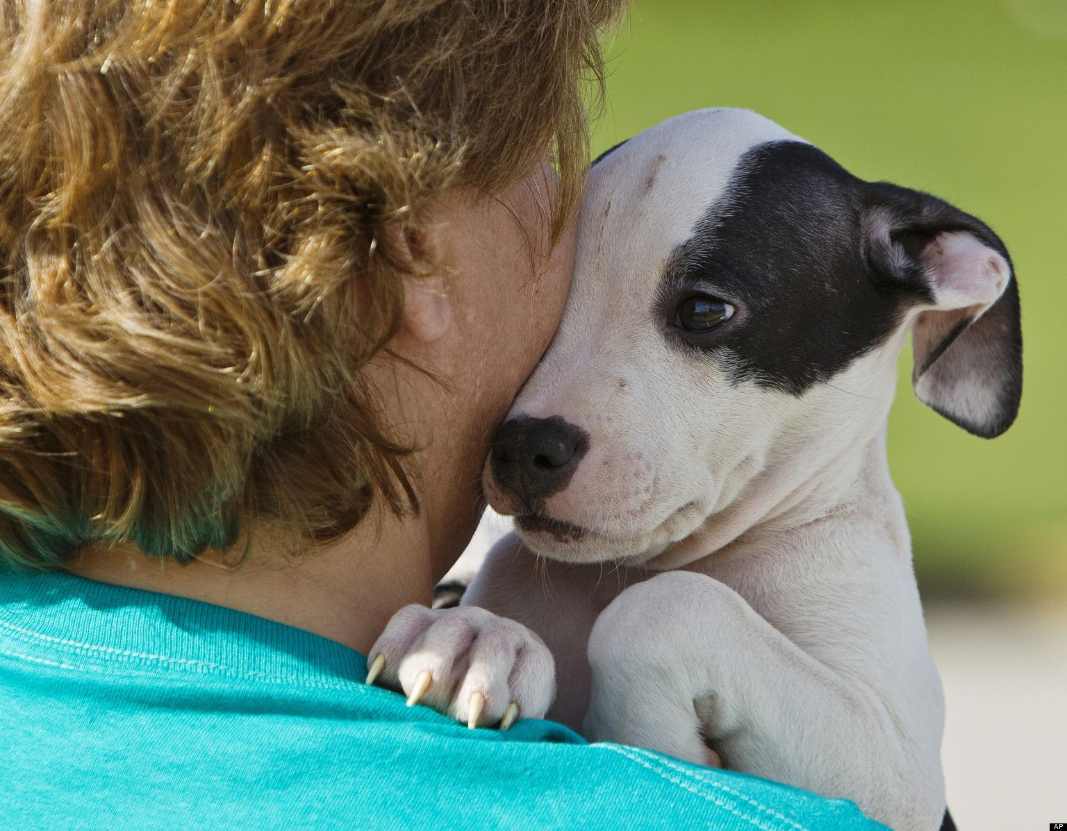 How You Can Help Shelter Pets Animals, Animal photo