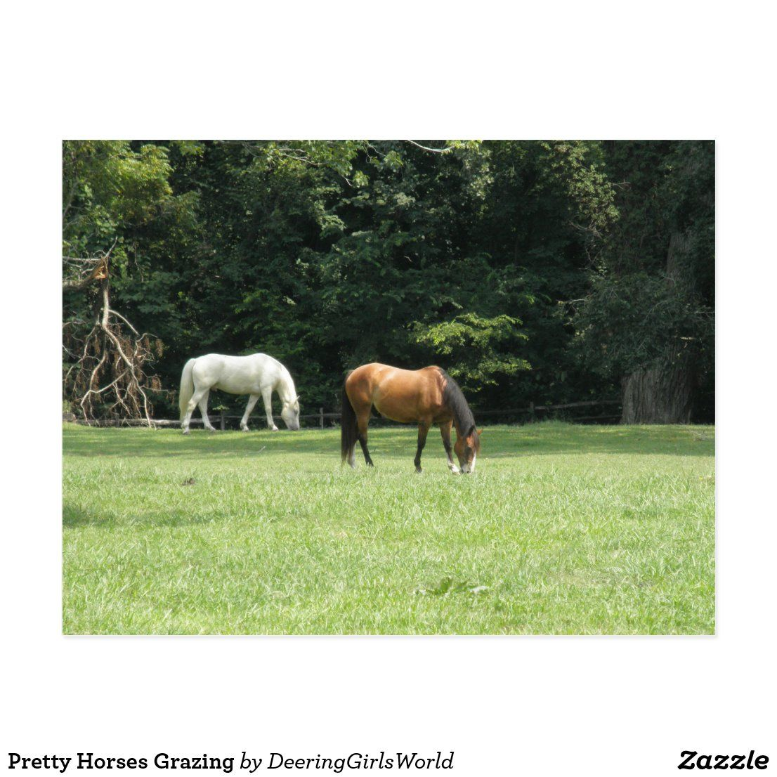Pretty horses grazing postcard in 2020 with