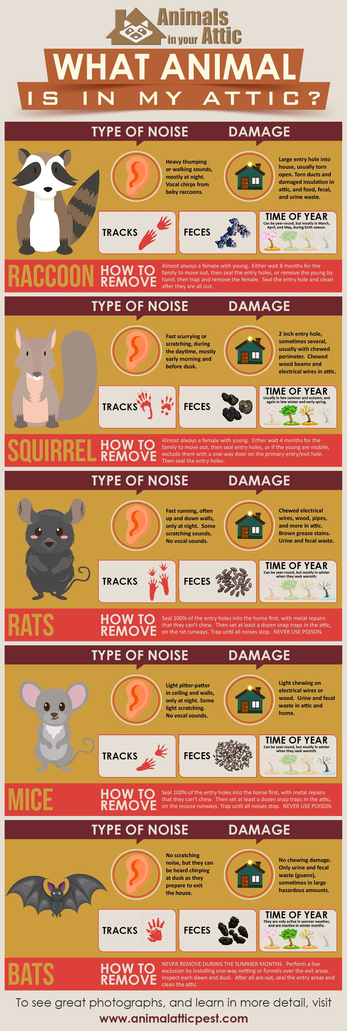 What Animal Is In My Attic Infographic Attic Get Rid Of Squirrels
