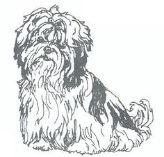 Shih Tzu Coloring Pages Google Search Horse Coloring Pages