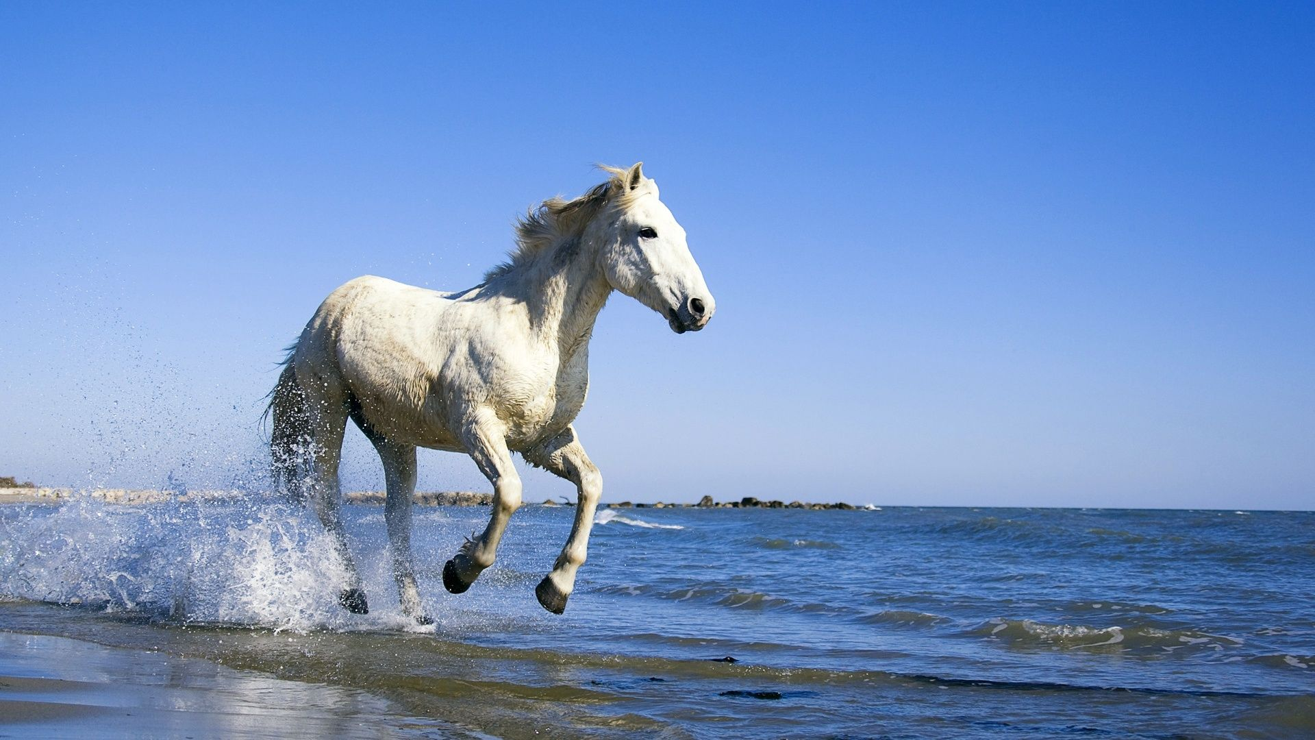 Cool Wallpaper Horse Water - 2a18ac2ccafca71489c48fcc81bd3456  Best Photo Reference_279434.jpg