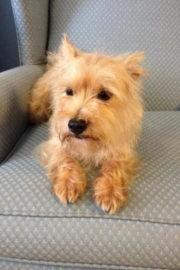 Yoda Is Available For Adoption On Allpaws Com View And Share