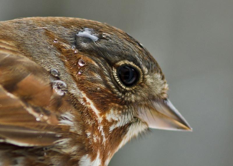 sparrow wings - Google zoeken