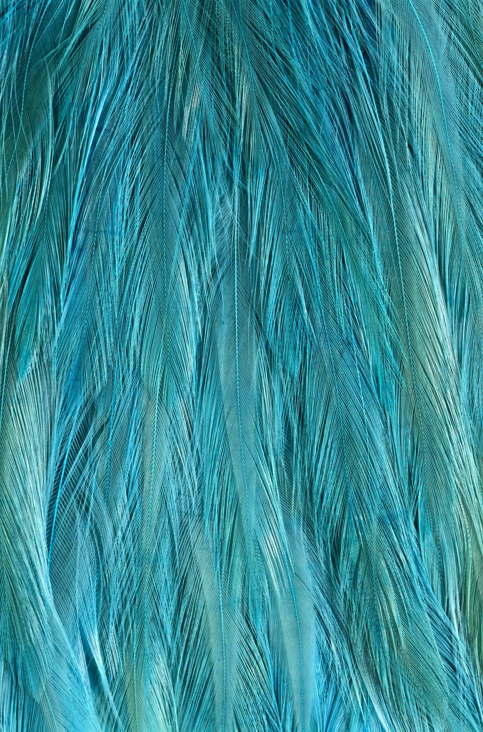Feather Texture More Sebeju Pinterest Feathers