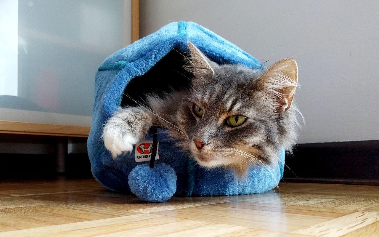 Il posto migliore dove nascondersi se siete un micio? Ecco una selezione tra le più belle nicchie per gatti di design: ottimi materiali e ottime idee!