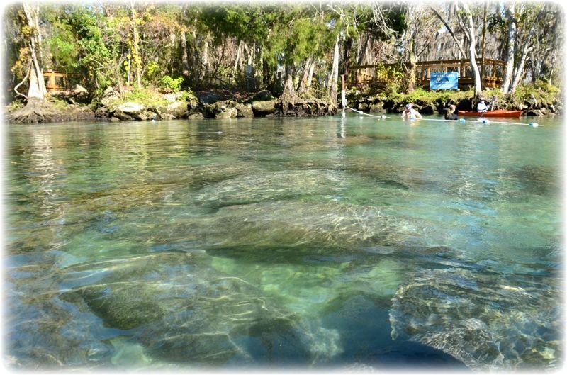 Crystal River Florida National Wildlife Refuge Three Sisters - Florida rivers