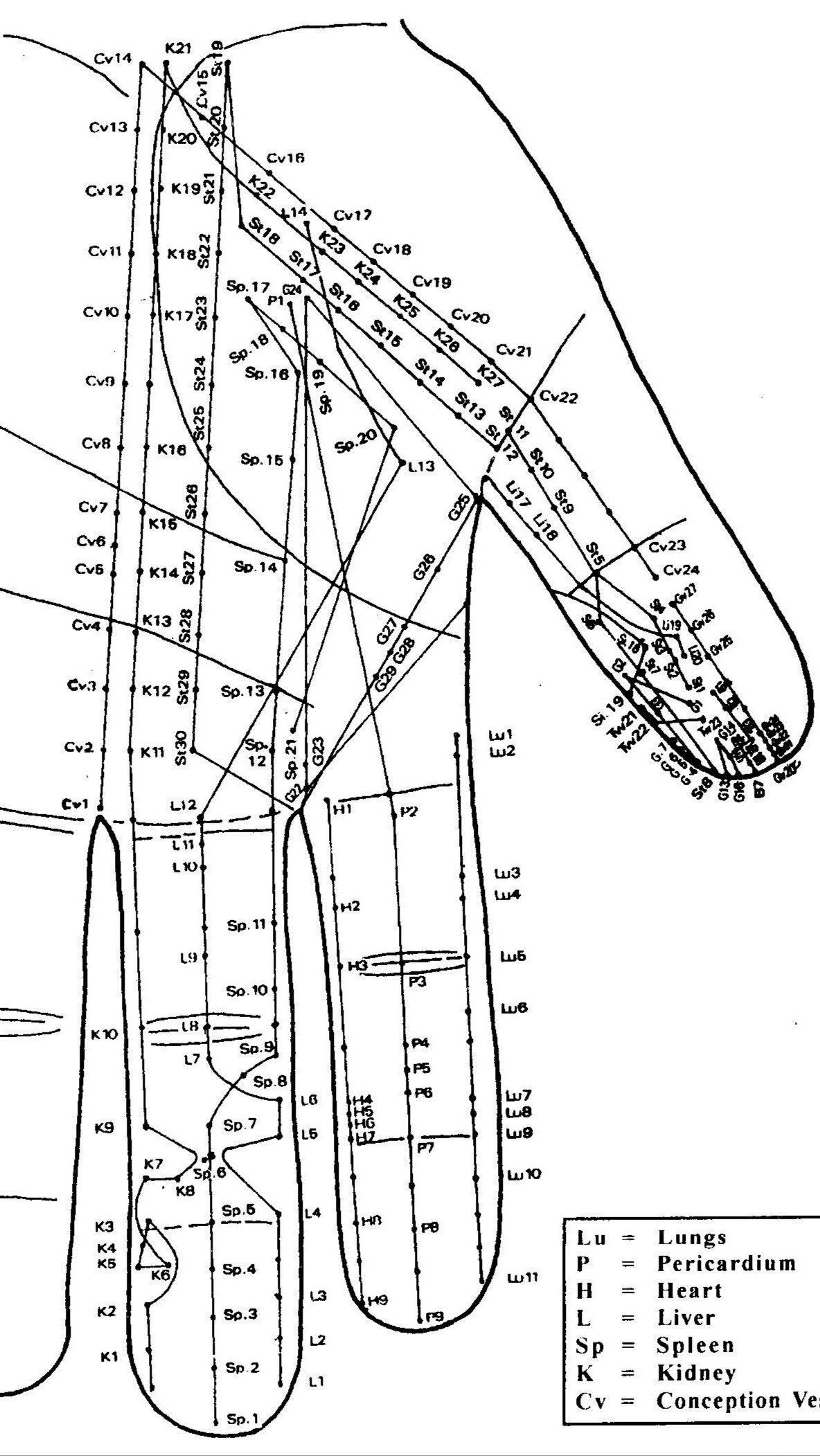 Tcm Byol Points Meridians In