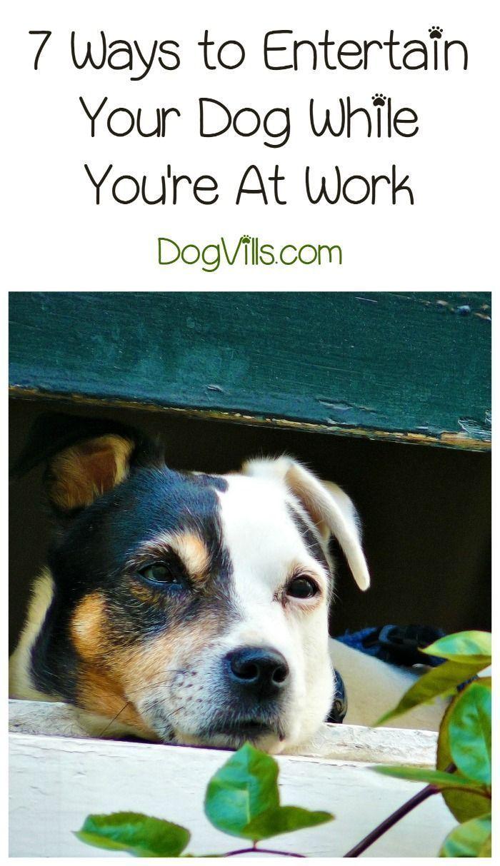 How Do I Entertain My Dog While I M At Work Dogs Dog Training