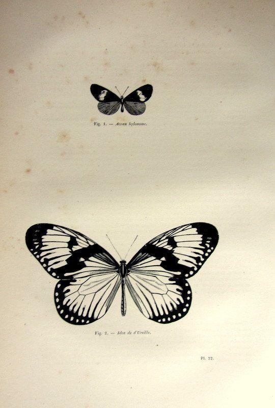 1860 amazing Vintage stampa, oggetto dantiquariato originale rara farfalla lepidotteri incisione, illustrazione di Acraea hylonome piastra di
