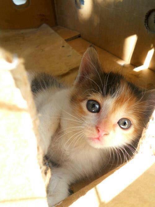 Innocent Kitten Kittens Cutest Cute Cats Photos Cute Cats And Kittens