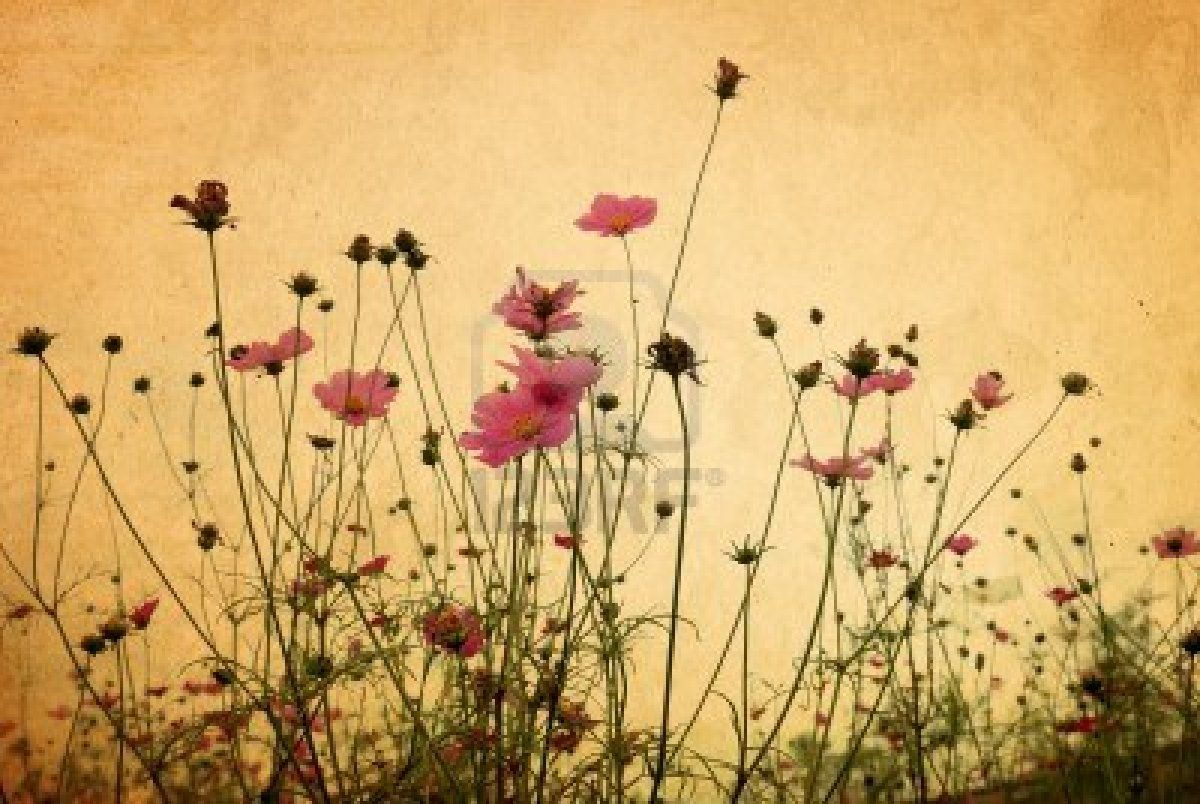 Stock Photo Vintage Desktop Wallpapers Vintage Flowers Flower